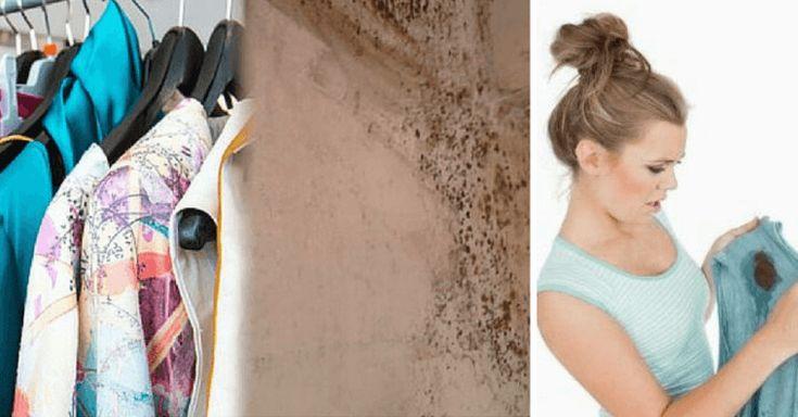 """Conozca los peligros de la """"enfermedad del moho"""" y cómo prevenirla - e-Consejos"""