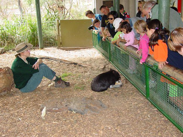 Australische Tierwelt hautnah im Healesville Sanctuary | WALKABOUT