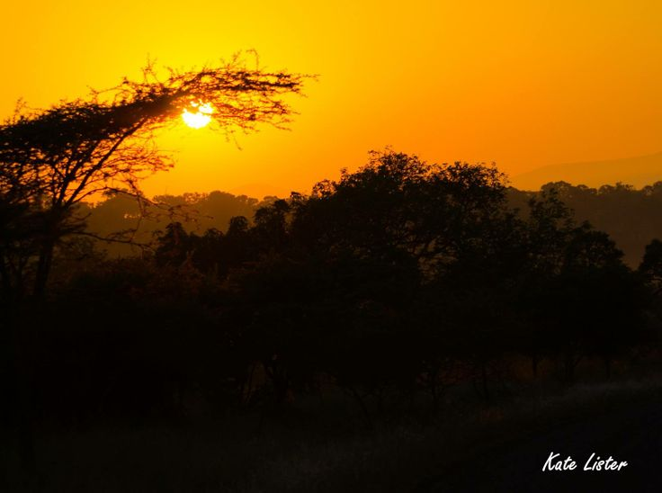 After watching dawn break day after day, we have become experts on sunrises. This morning's was really special.