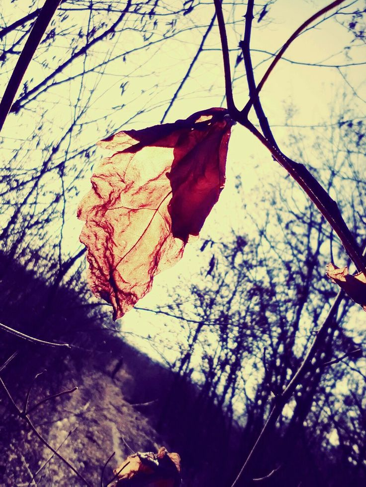 Dead nature and a single sign of life #autumn