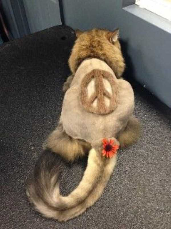 Ridiculously Stupid Cat Haircuts