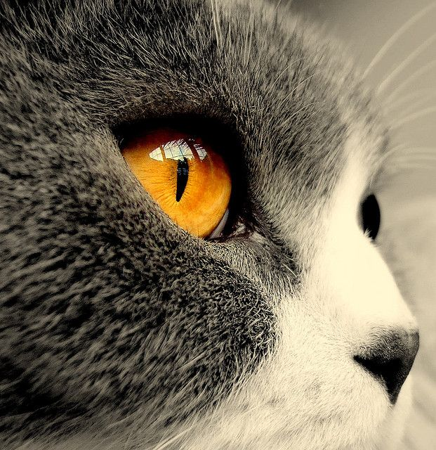 The eye of the tiger… by Paul Vaarkamp on Flickr.