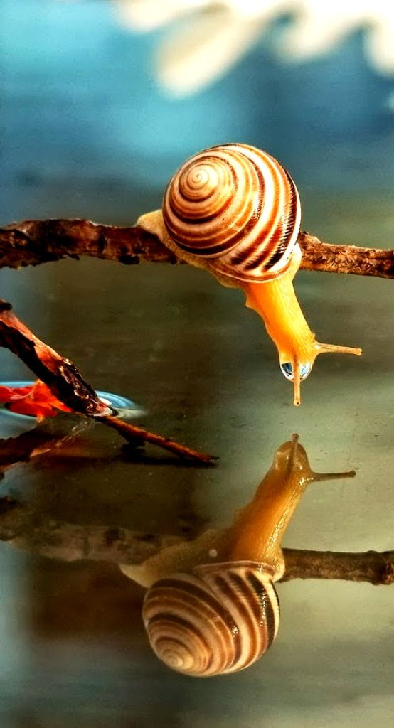 """  Can I escort you to the waterhole "",and why do you keep repeating what I say ?.    Awesome!.....Banded Snails I believe them to be."