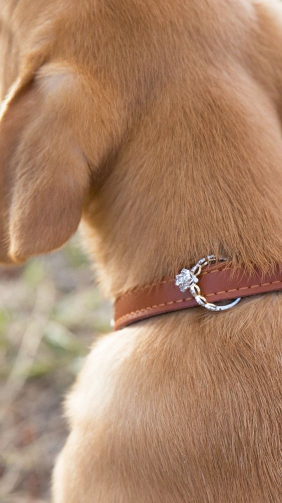 "Ensure she'll say ""yes"" with the cutest pup-posal wingman EVER!  #HerestoLove #ValentinesDay #helzberg #proposal #engagement #ido"