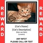 Lost Cat Flyer Templates