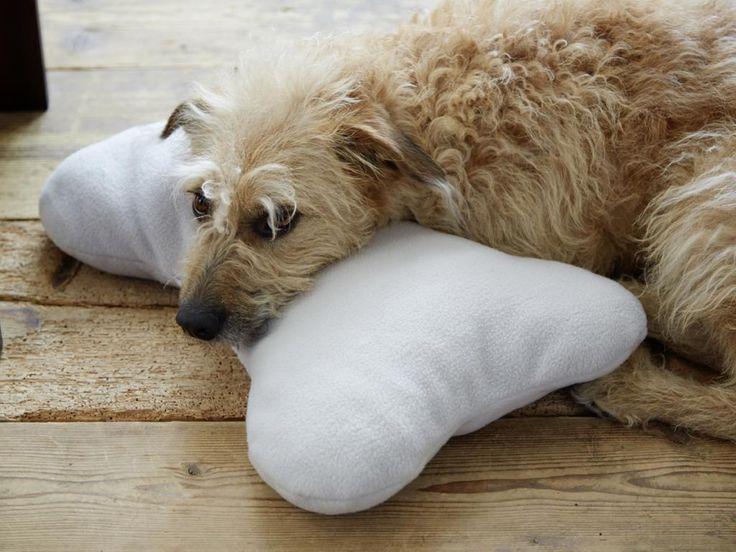 Sooo niedlich! Dieses flauschige Kissen in Knochenform wird Ihr Hund lieben. Beobachten Sie ihn beim Spielen, Kuscheln und Herumtragen.