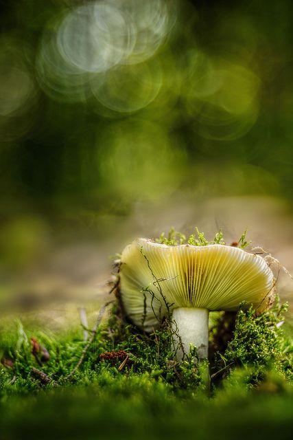 Bokeh photography mushroom Es wird Herbst