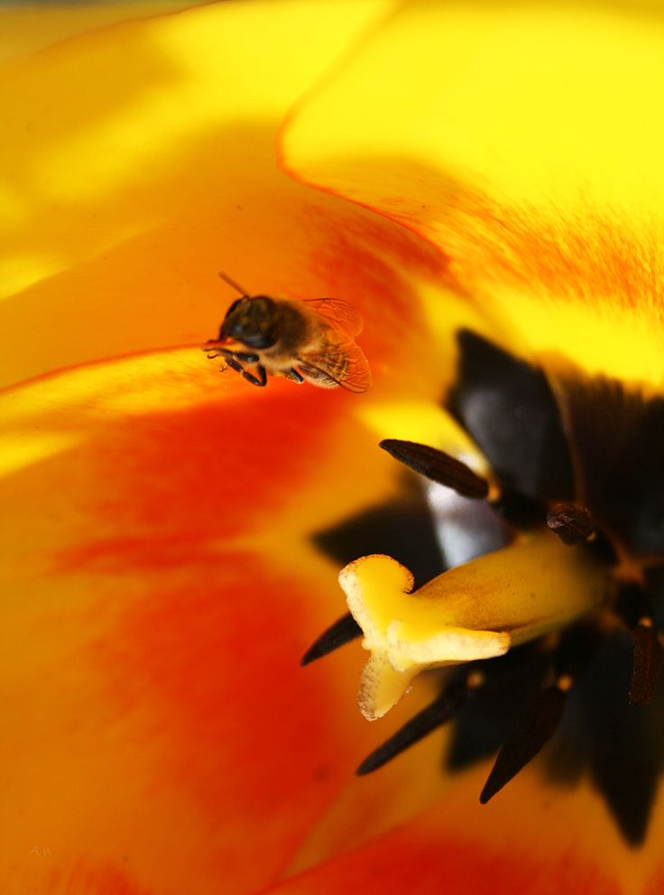 Hanging on by a petal by An Drada on 500px