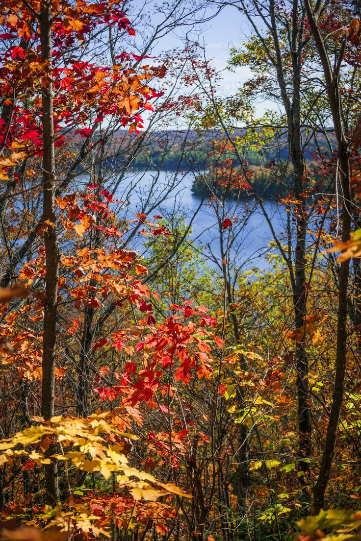 Fall forest framing scenic autumn lake view from Lookout trail in Algonquin…