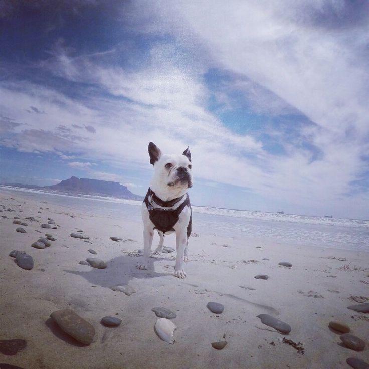 Cutie pie ! Table Mountain SA