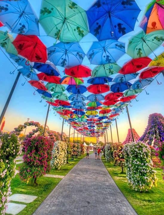 Miracle Garden in Dubai.