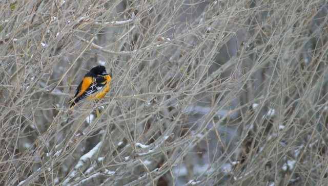 Baltimore Oriole     Get Cheap Baltimore Orioles Tickets Here and Save!  All Baltimore Orioles Tickets Have Been Reduced!  http://craigslisttickets.biz/ResultsEvent.aspx?event=Baltimore+Orioles=92