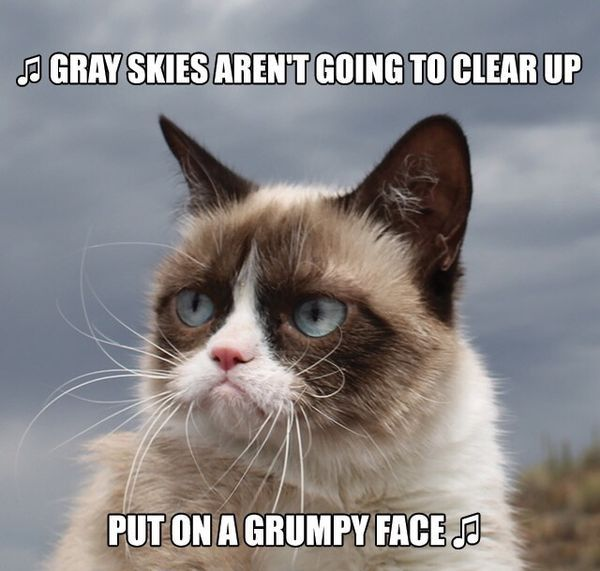 Grumpy Cat Gray Skies Put On A Face cats