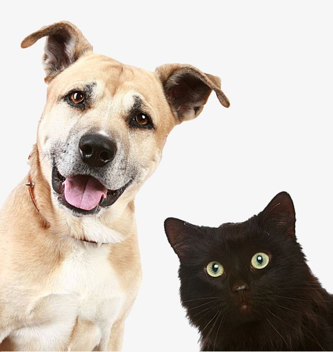 Pictures Of Dogs And Cats Dog Cat Animal Png And Vector With Transparent Background For Free Download Mascotas Imagenes De Perros Perro Gato