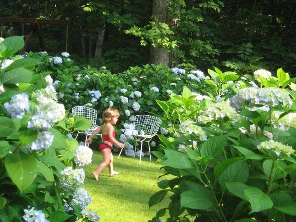 Hydrangeas Gardening Zone 5 Gardens Garden Pinterest