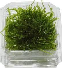 Afbeeldingsresultaat voor mos kweken