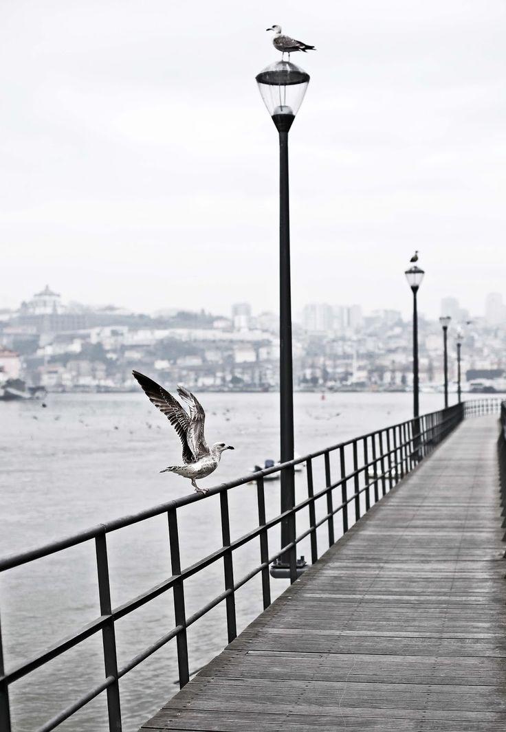 Gaia- Douro river - Pratos e Travessas | Food, photography and stories