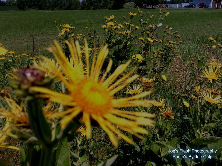 Wildflowers taken off casey Road in Belleville Ontario