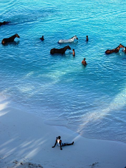 Barbados - horses      Every morning, horses are brought by their handlers from the nearby racetrack to the sea at Carlisle Bay to be washed. Some of the them are given a swim as well.