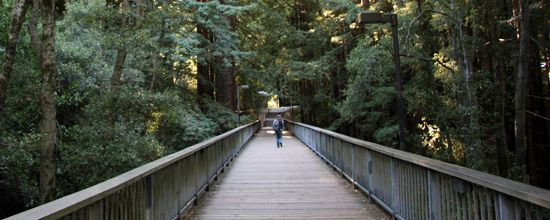 UC Santa Cruz; bridges cross ravines of redwood trees and there are trails and wildlife everywhere (animals show up more in the early morning and between school terms, when the campus isn't as populated)