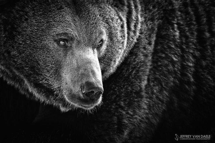 Bear by Jeffrey Van Daele on 500px