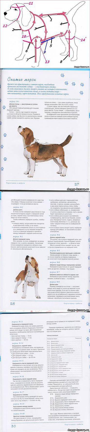 снятие мерок с собаки - Шьем одежду для собак