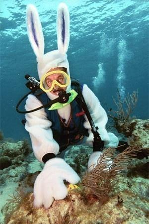 Go on an underwater Easter Egg hunt in the Florida Keys
