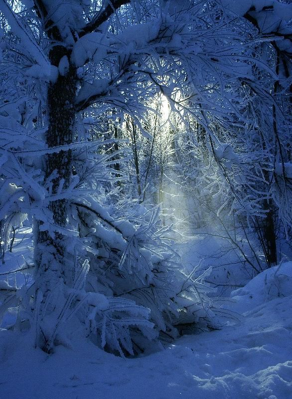 .snow blue forest.