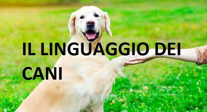 Capire i cani: ecco come riconoscere il linguaggio dei cani