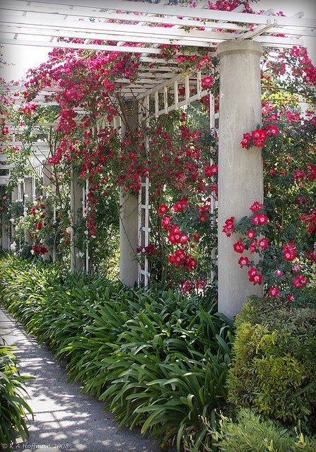 Beautiful Rose Covered Arbor.