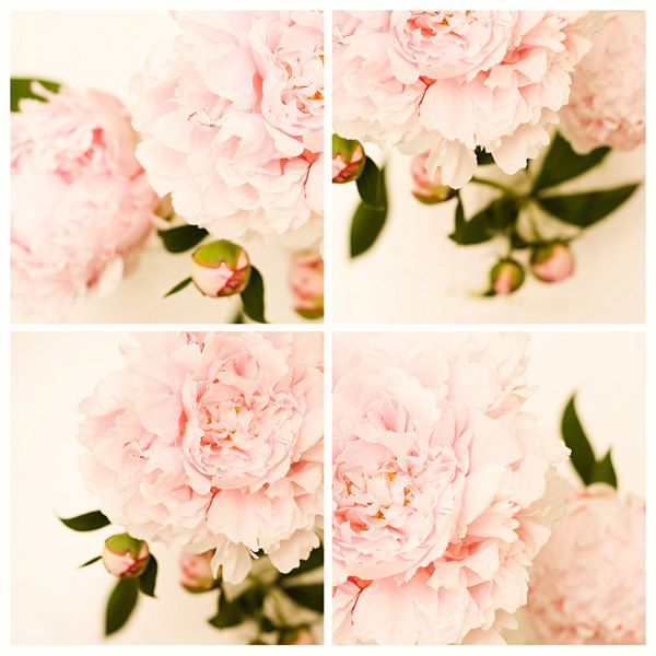 Peony Wall Art 148 best peony images on pinterest | pink peonies, pink flowers