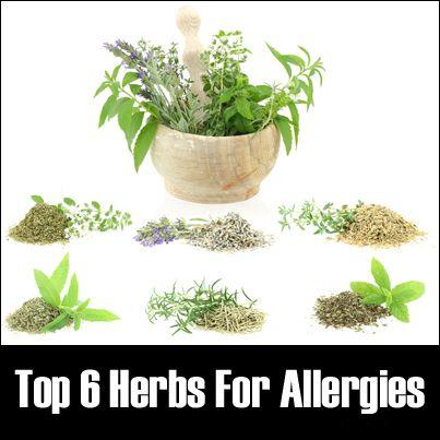 Alívio de alergias com ervas naturais.