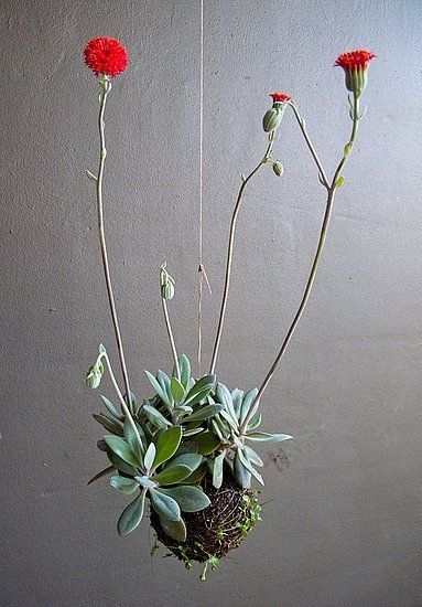 Ethereal Beauty: Fedor van der Valk Discusses His String Gardens: Sweet red button flowers bloom from the string garden. To learn more about Fedor's work, go to his site String Gardens.