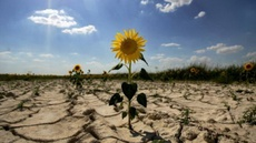 El año que viene habrá una hambruna en todo el mundo, según la ONU – RT