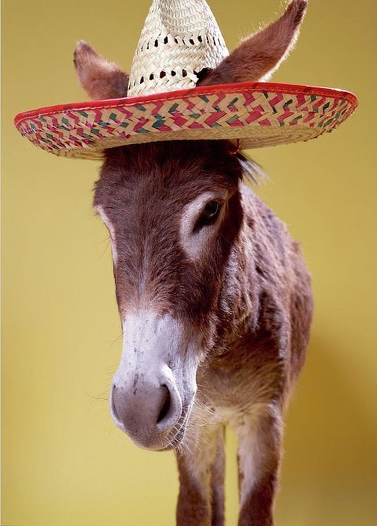 Pin on Donkeys n Mules