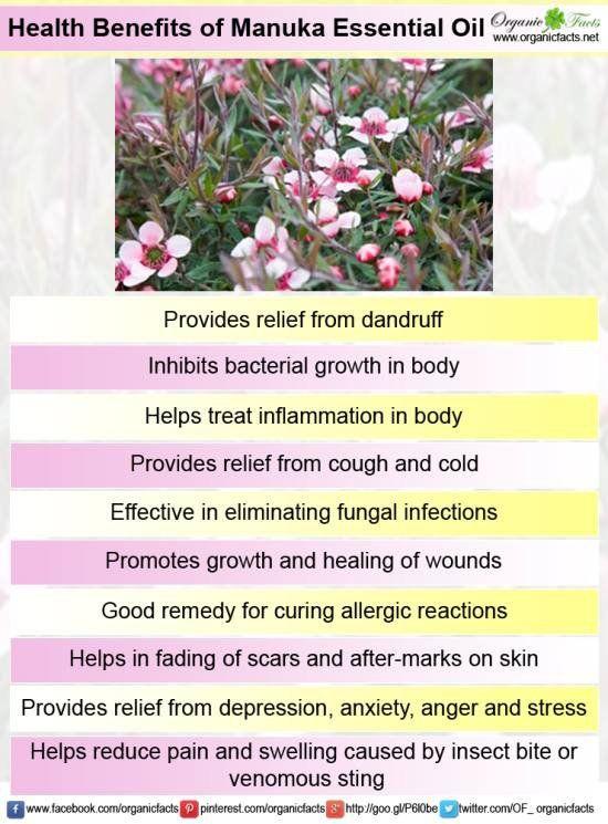 Benefits of Manuka Essential Oil.