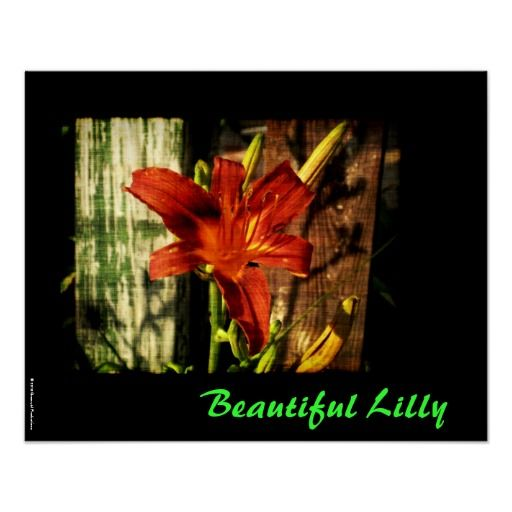 Beautiful Lilly Poster by Groovyal