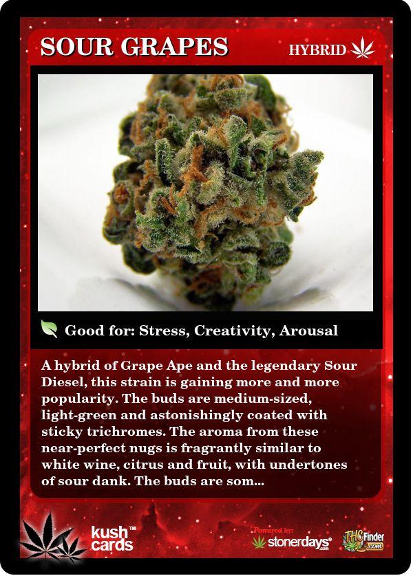 Sour Grapes | Repined By 5280mosli.com | Organic Cannabis College | Top Shelf Marijuana | High Quality Shatter