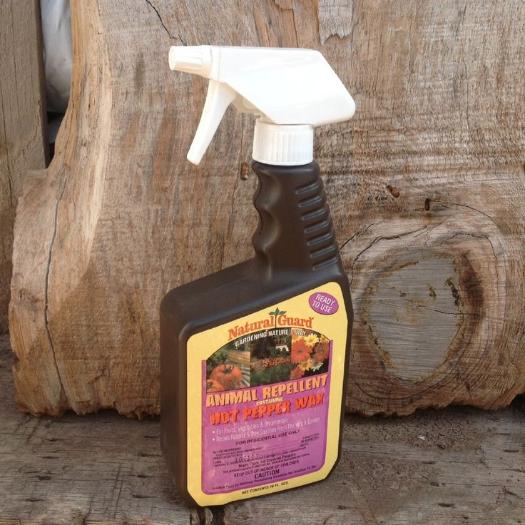 Best 25 Squirrel Repellant Ideas On Pinterest A