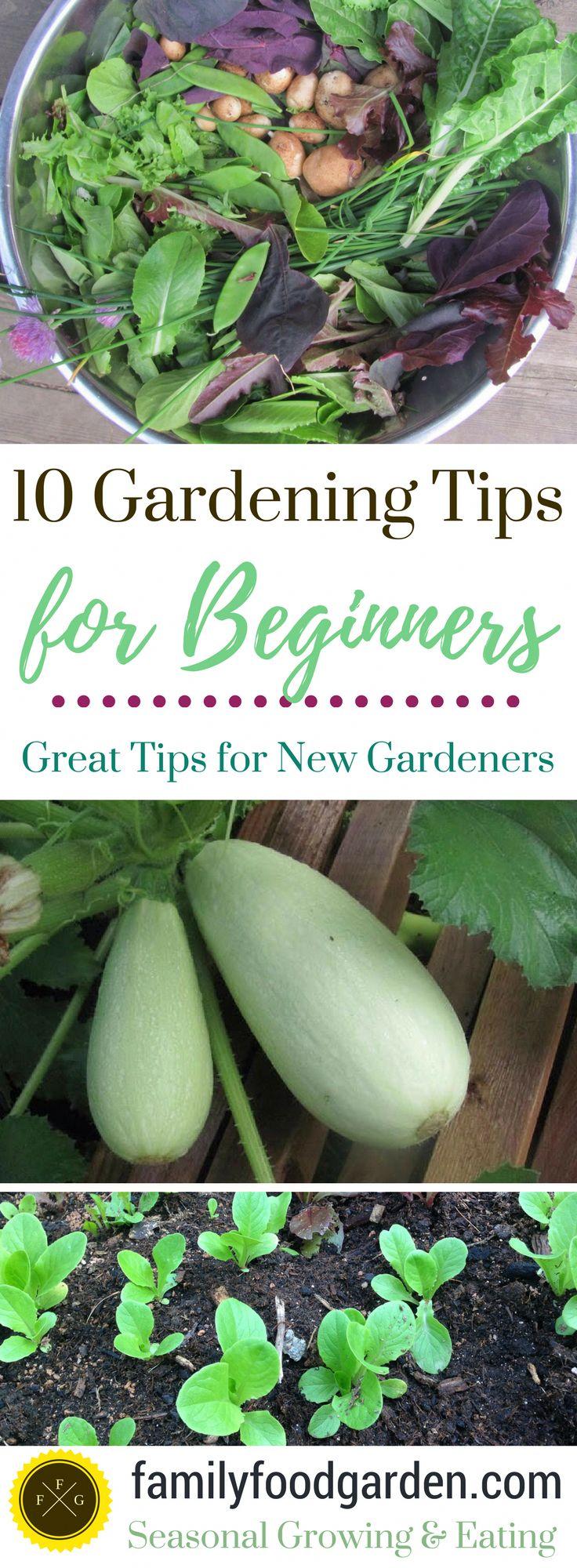 10 Tipps für Anfänger im Garten