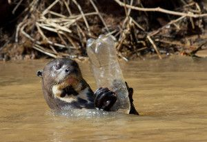 Declare Your Independence From Plastic to Protect Wildlife