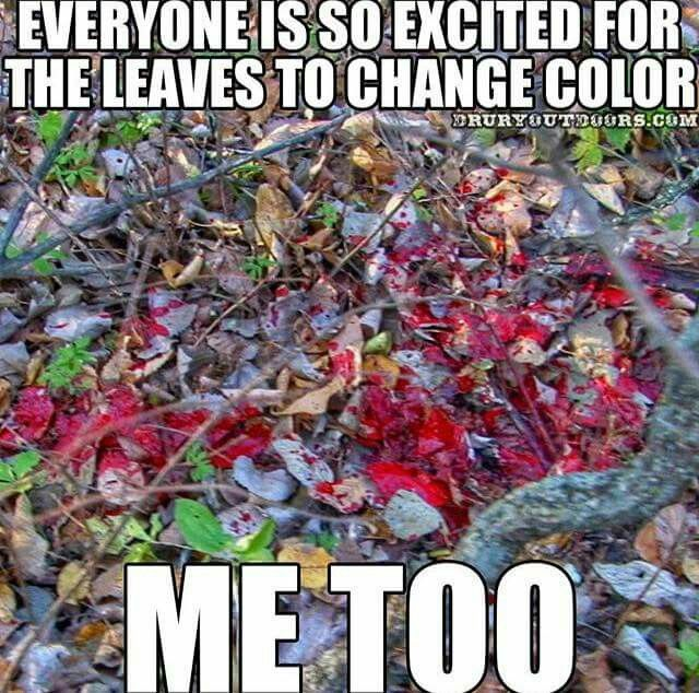 Everyone is so excited when the leaves changing color, me too.