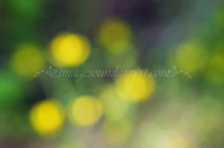 blur green-yellow spring  background