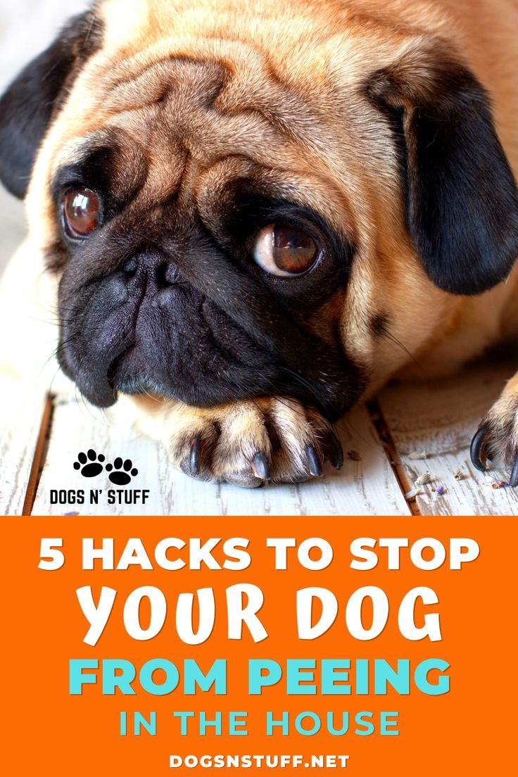 5 Simple Hacks On How To Stop A Dog From Peeing In The House