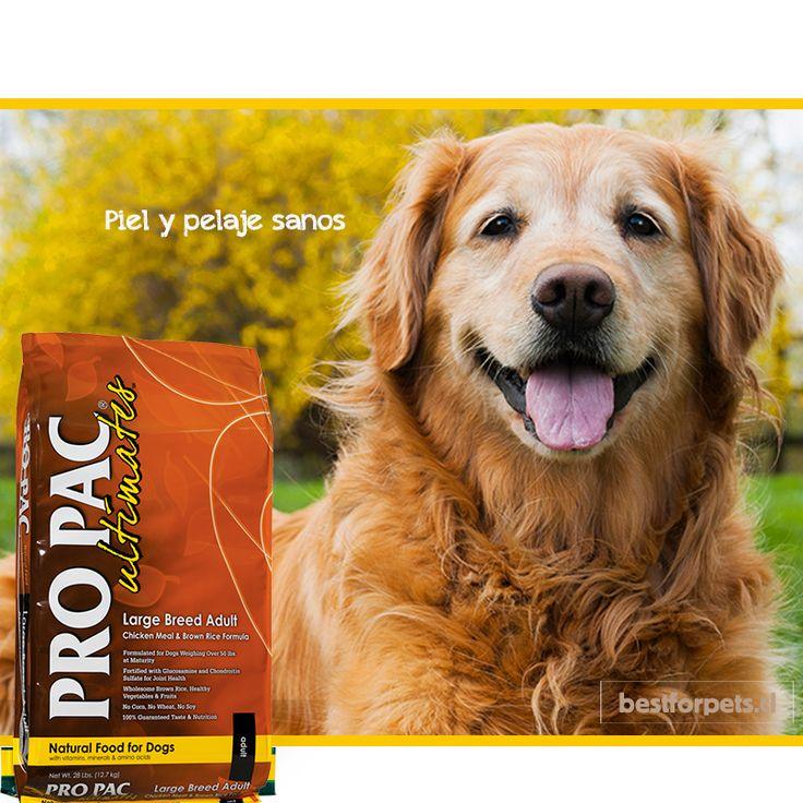 Pro Pac le entrega a tu perro una fórmula nutricionalmente equilibrada y fortificada, donde la carne es su 1er ingrediente y más abundante.