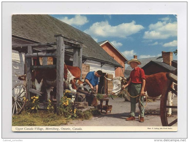 "MORRISBURG : "" UPPER CANADA VILLAGE "" - Marechal ferrant sur vache - Blacksmith shoes the oxen"
