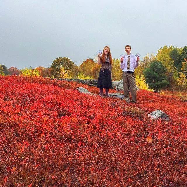Disfrutando de la distribución de las invitaciones a reuniones en los arbustos de arándanos de Maine,