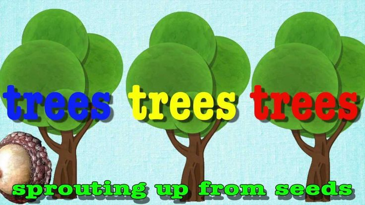 Teach about the parts of trees to the tune of head shoulders knees and toes. See more of Mr. R.'s free science resources at: http://sciencepoems.net LYRICS: ...