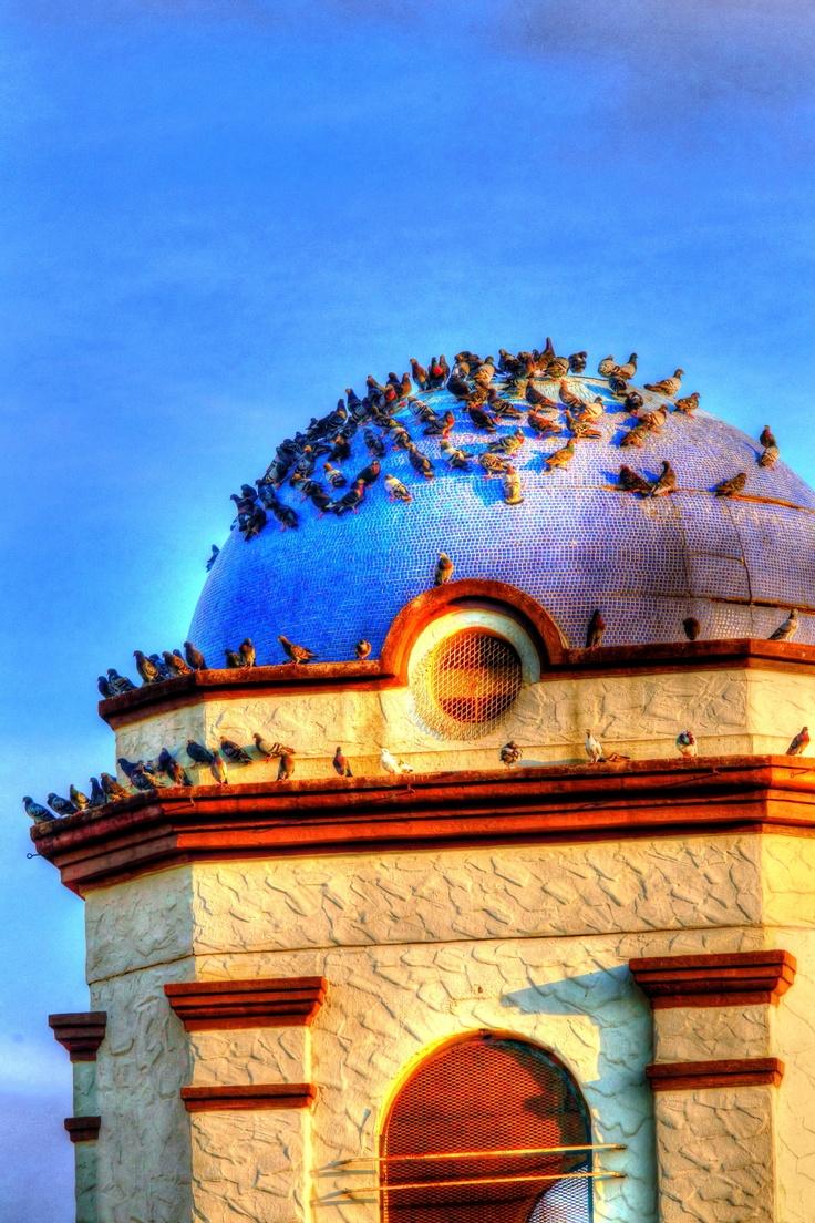 Birds line the atrium in Brownsville, Texas