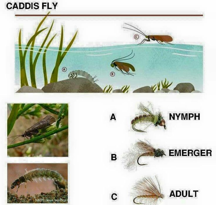 17 Best Images About Fly Tying Real Life Bugs Close To